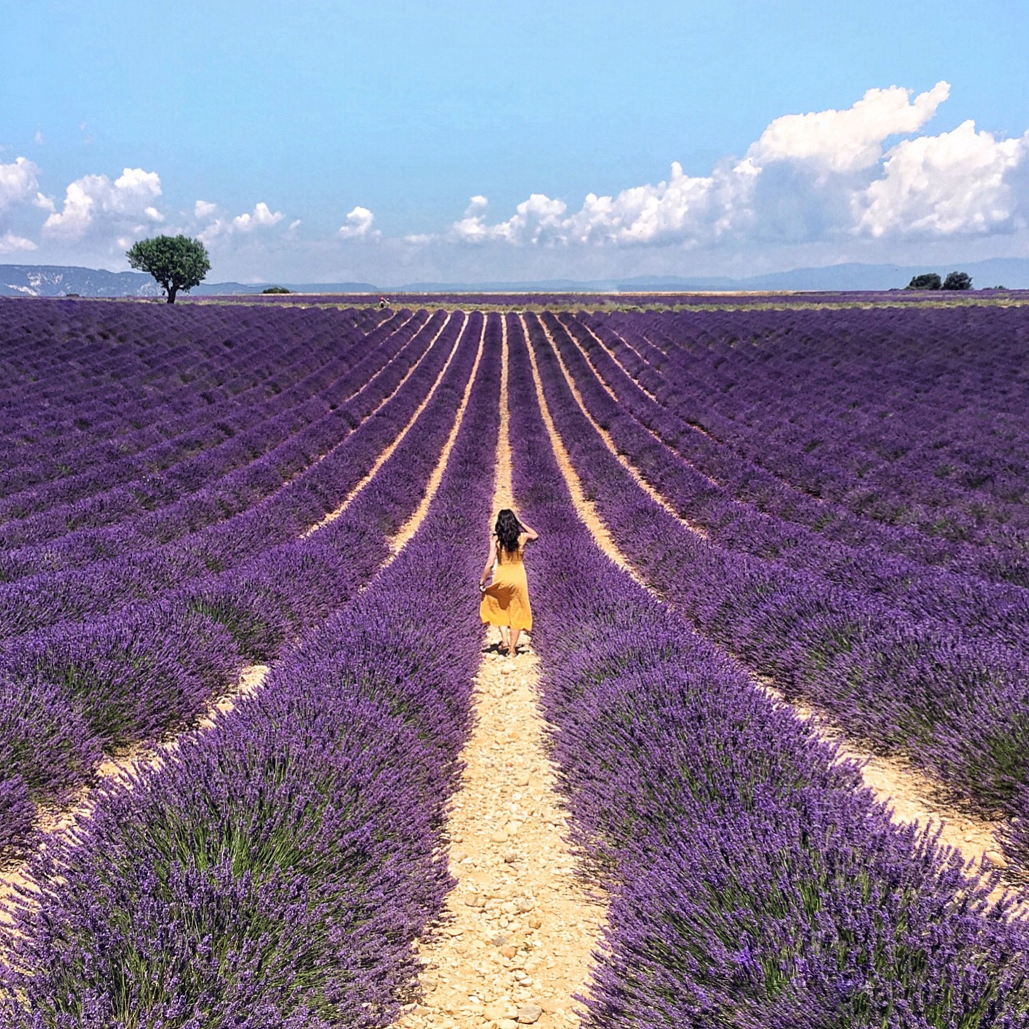 Lavender Fields In Provence: A Photo And Trip Diary